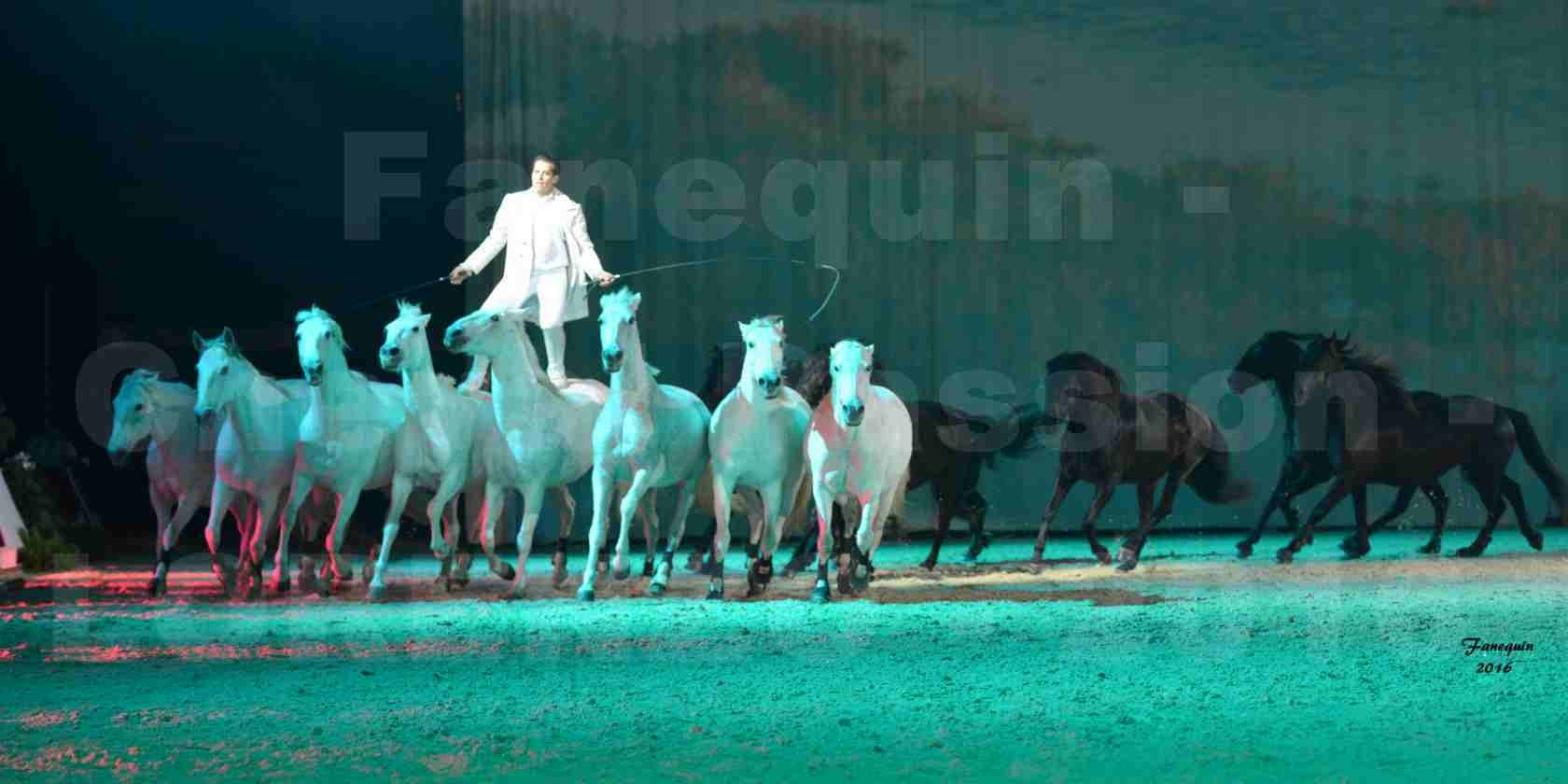 """Cheval Passion 2016 - Spectacle les Crinières d'OR - LORENZO """"Blanc"""" - représentation du 23 janvier 2016 - 22"""