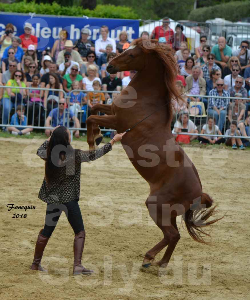 Spectacle Équestre le 3 juin 2018 à Saint Gély du Fesc - 5 chevaux en liberté - Anne Gaëlle BERTHO - 02