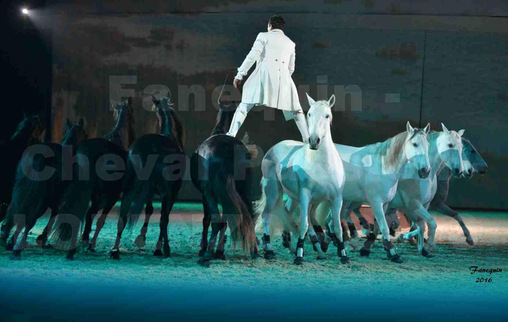 """Cheval Passion 2016 - Spectacle les Crinières d'OR - LORENZO """"Blanc"""" - représentation du 20 janvier 2016 - 28"""