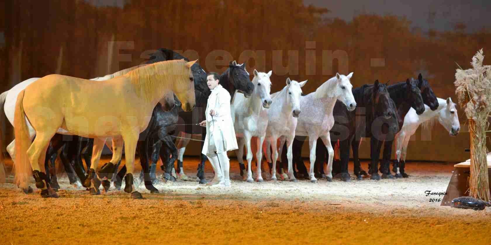 """Cheval Passion 2016 - Spectacle les Crinières d'OR - LORENZO """"Blanc"""" - représentation du 20 janvier 2016 - 46"""