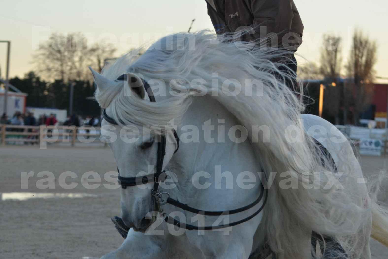 """Cheval Passion 2014 - Etalon """"GALAN""""  blanc écurie Alain LAUZIER - Notre Sélection - Portraits - 08"""