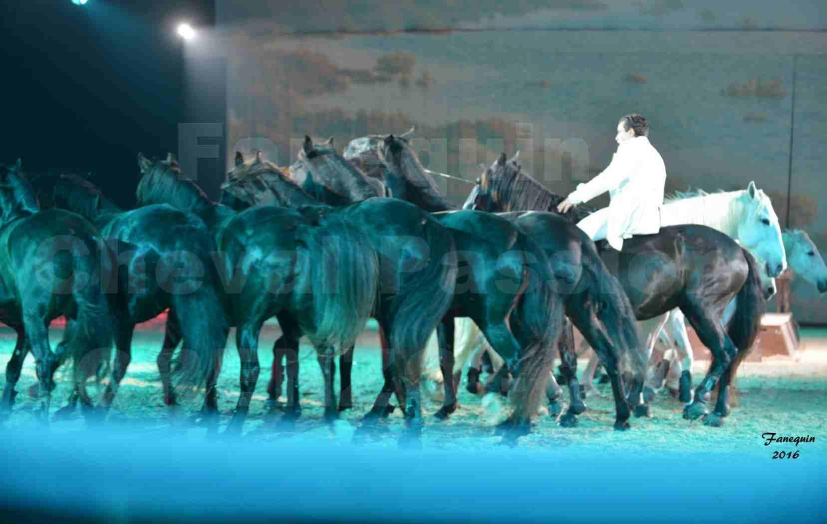 """Cheval Passion 2016 - Spectacle les Crinières d'OR - LORENZO """"Blanc"""" - représentation du 20 janvier 2016 - 27"""