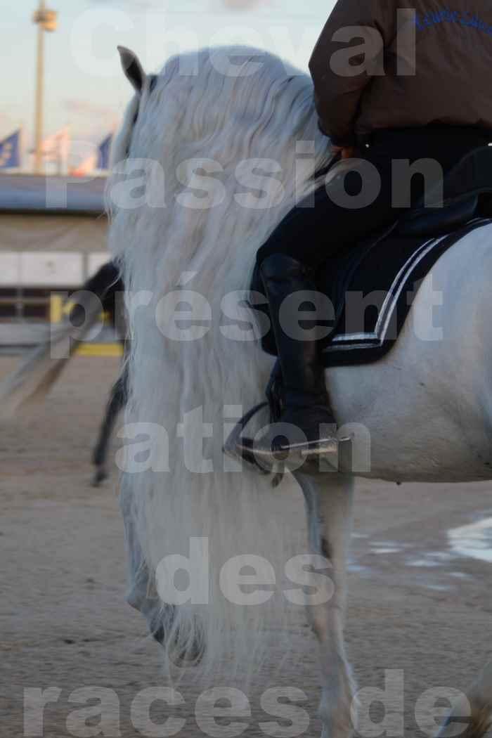 """Cheval Passion 2014 - Etalon """"GALAN""""  blanc écurie Alain LAUZIER - Notre Sélection - Portraits - 10"""