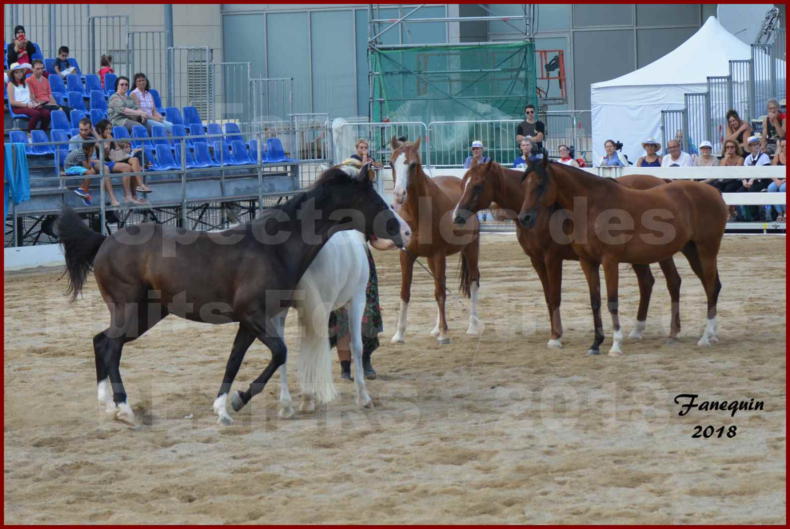 """""""Nuits Équestres""""  de la Féria de BÉZIERS 2018 - Spectacle en journée - Sylvie WILLMS & ses chevaux en liberté - 07"""