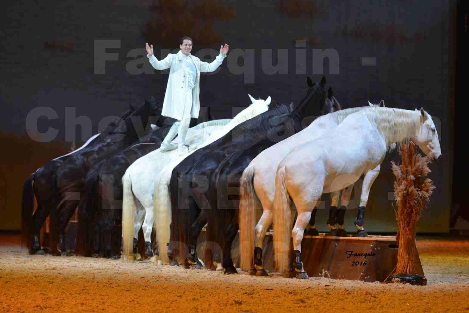 """Cheval Passion 2016 - Spectacle les Crinières d'OR - LORENZO """"Blanc"""" - représentation du 23 janvier 2016 - 42"""