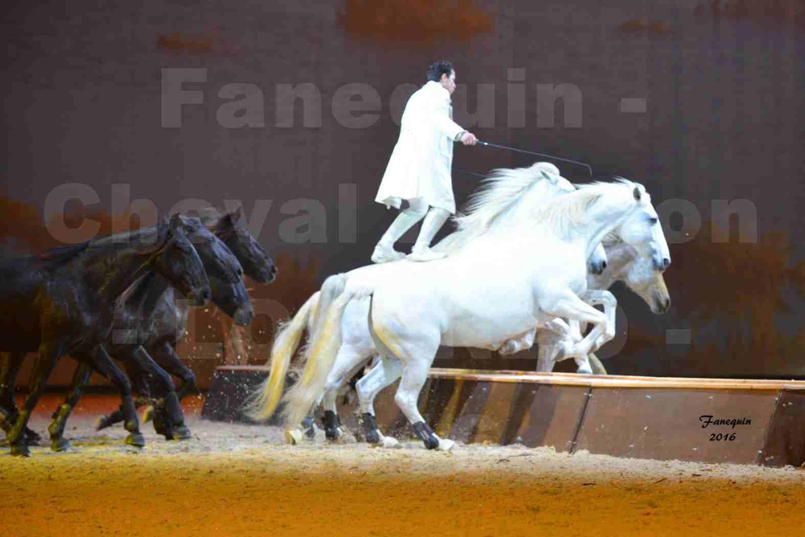 """Cheval Passion 2016 - Spectacle les Crinières d'OR - LORENZO """"Blanc"""" - représentation du 23 janvier 2016 - 34"""