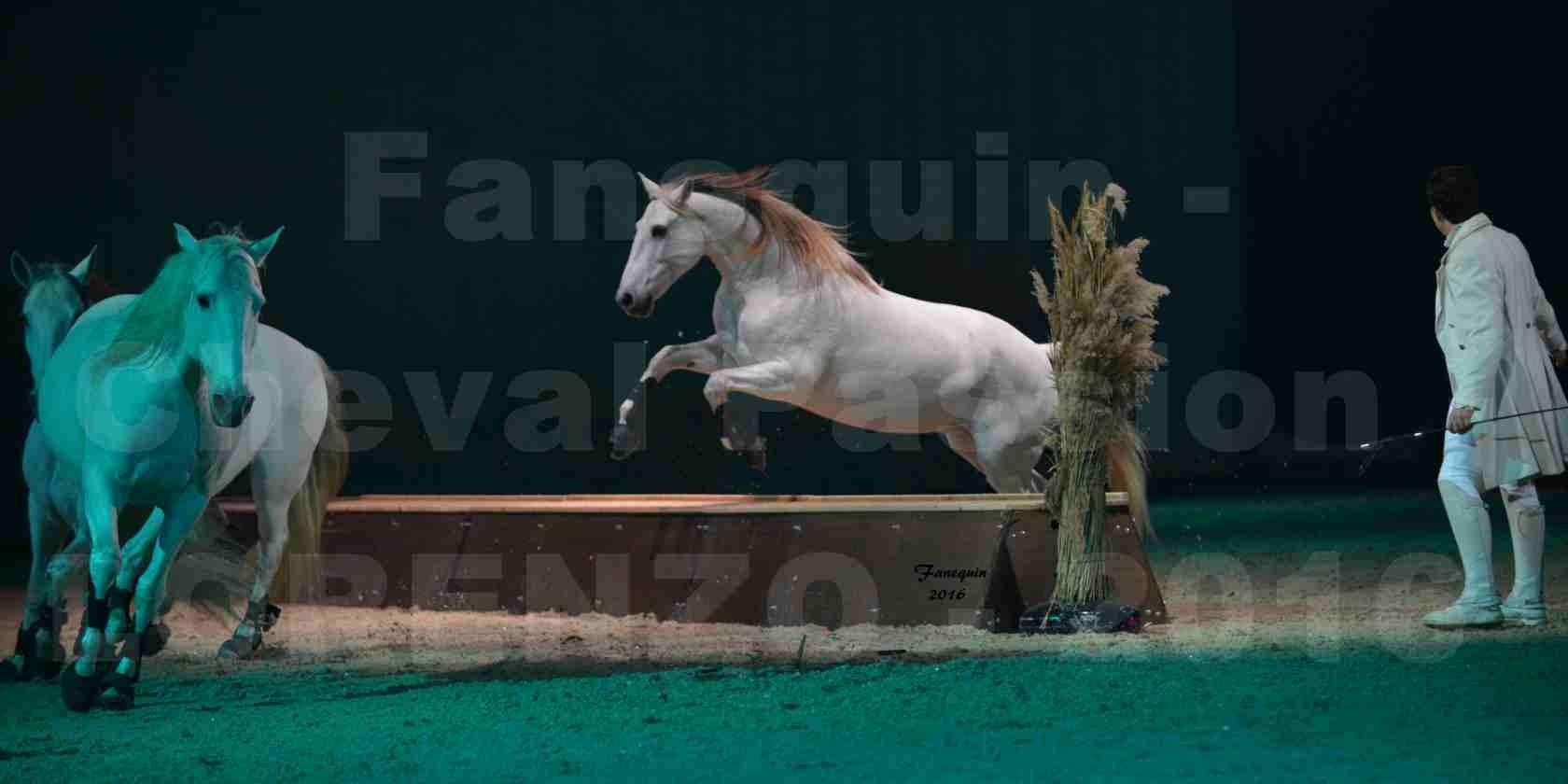 """Cheval Passion 2016 - Spectacle les Crinières d'OR - LORENZO """"Blanc"""" - représentation du 23 janvier 2016 - 15"""