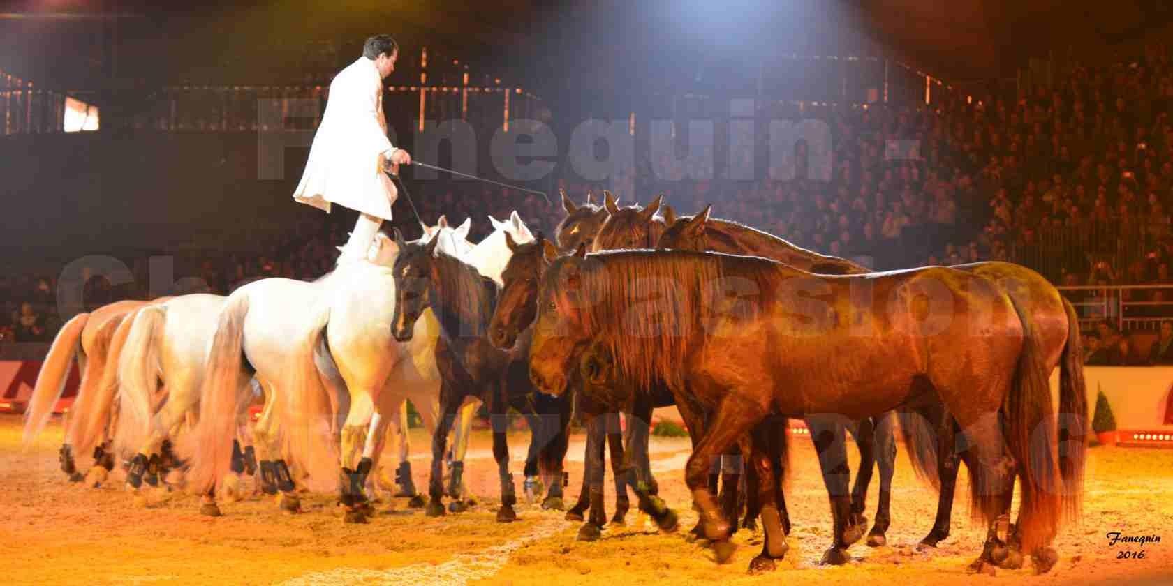 """Cheval Passion 2016 - Spectacle les Crinières d'OR - LORENZO """"Blanc"""" - représentation du 23 janvier 2016 - 26"""