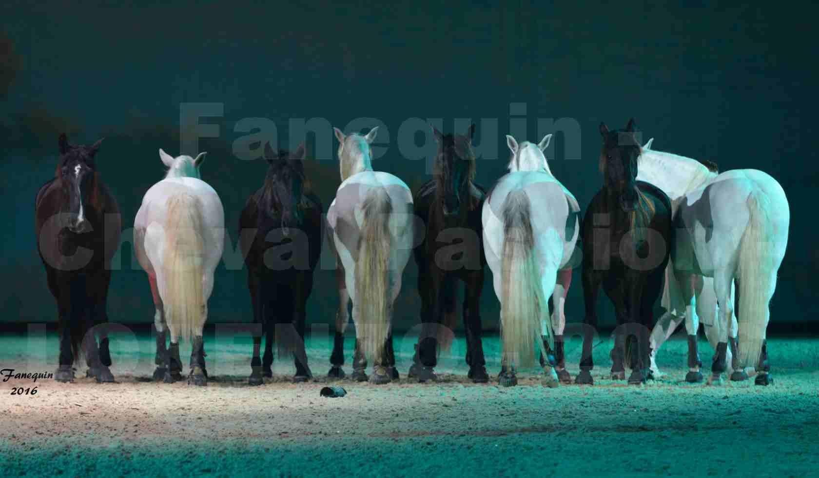 """Cheval Passion 2016 - Spectacle les Crinières d'OR - LORENZO """"Blanc"""" - représentation du 20 janvier 2016 - 12"""