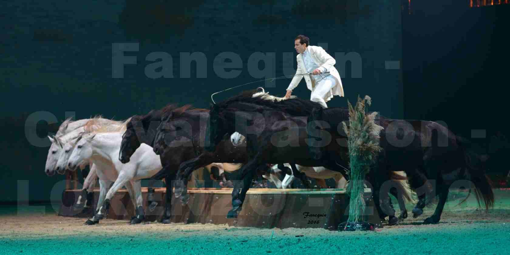 """Cheval Passion 2016 - Spectacle les Crinières d'OR - LORENZO """"Blanc"""" - représentation du 23 janvier 2016 - 14"""