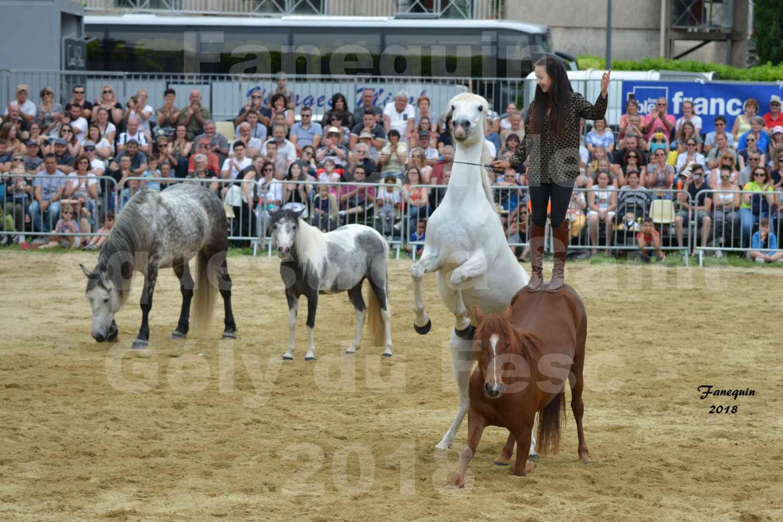 Spectacle Équestre le 3 juin 2018 à Saint Gély du Fesc - 5 chevaux en liberté - Anne Gaëlle BERTHO - 08