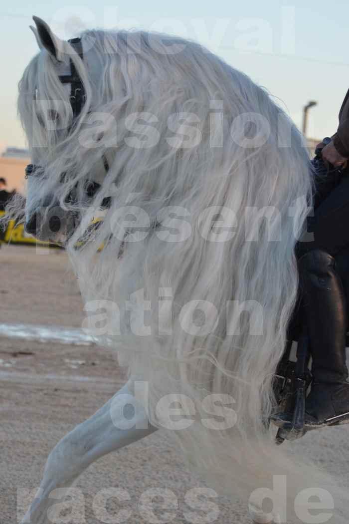 """Cheval Passion 2014 - Etalon """"GALAN""""  blanc écurie Alain LAUZIER - Notre Sélection - Portraits - 05"""