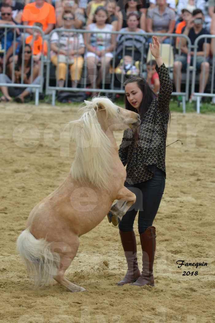 Spectacle Équestre le 3 juin 2018 à Saint Gély du Fesc - 5 chevaux en liberté - Anne Gaëlle BERTHO - 10