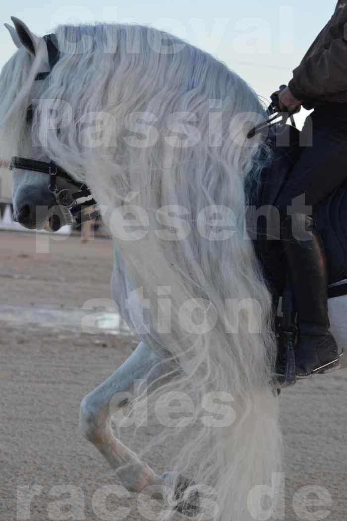 """Cheval Passion 2014 - Etalon """"GALAN""""  blanc écurie Alain LAUZIER - Notre Sélection - Portraits - 03"""