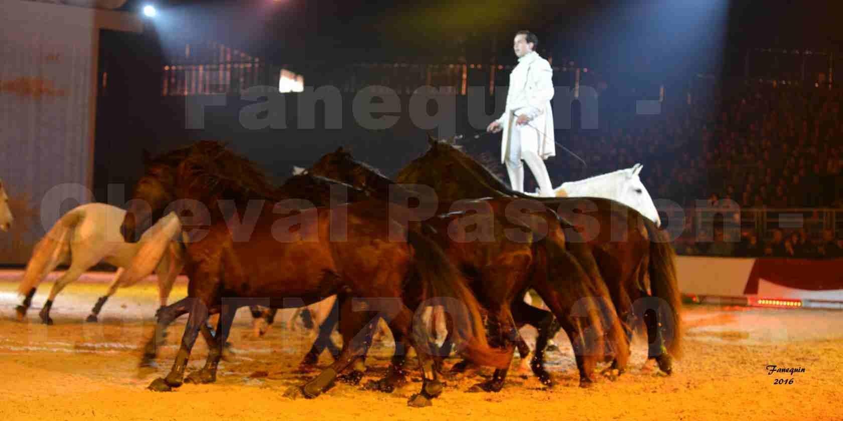 """Cheval Passion 2016 - Spectacle les Crinières d'OR - LORENZO """"Blanc"""" - représentation du 23 janvier 2016 - 31"""