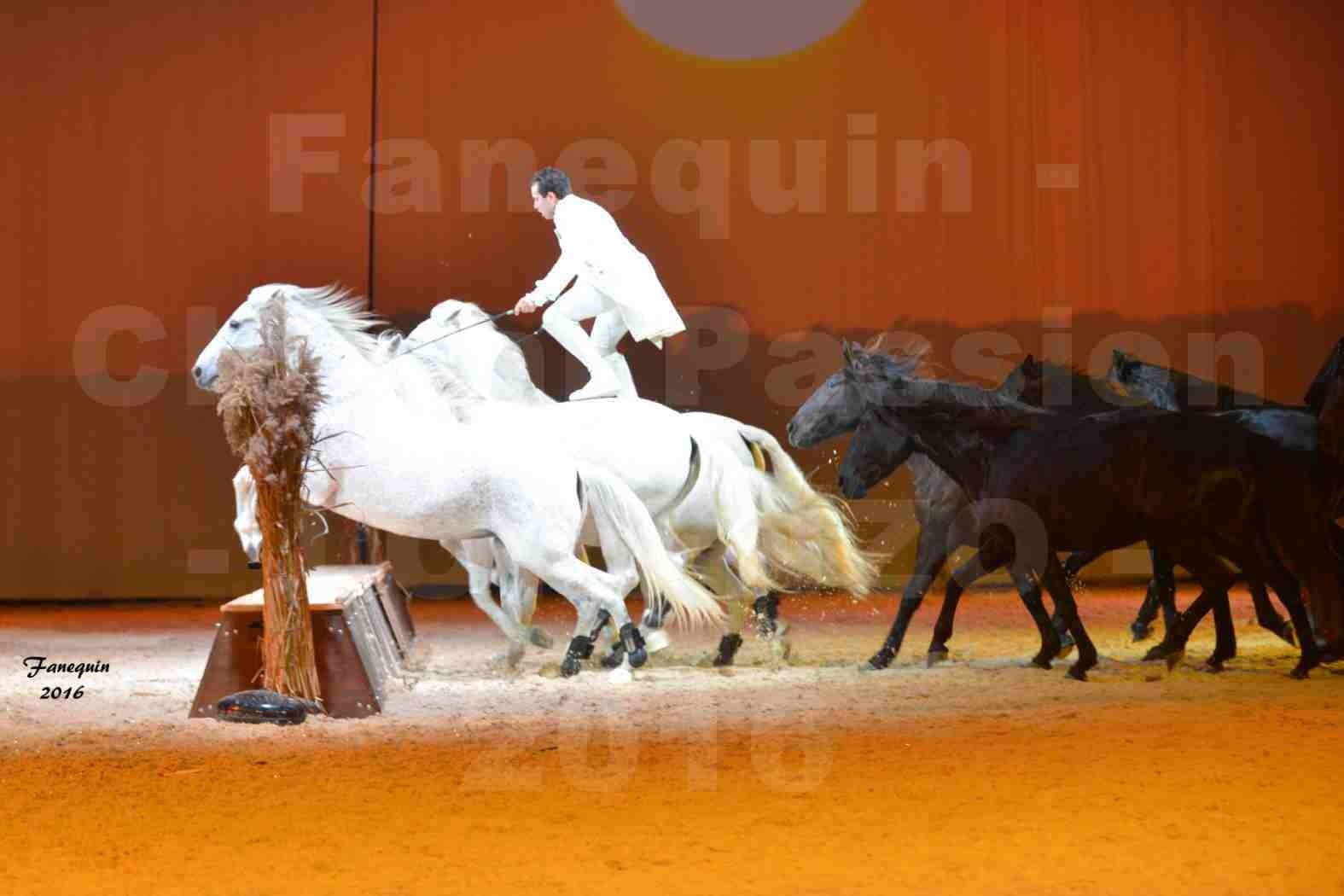 """Cheval Passion 2016 - Spectacle les Crinières d'OR - LORENZO """"Blanc"""" - représentation du 20 janvier 2016 - 37"""