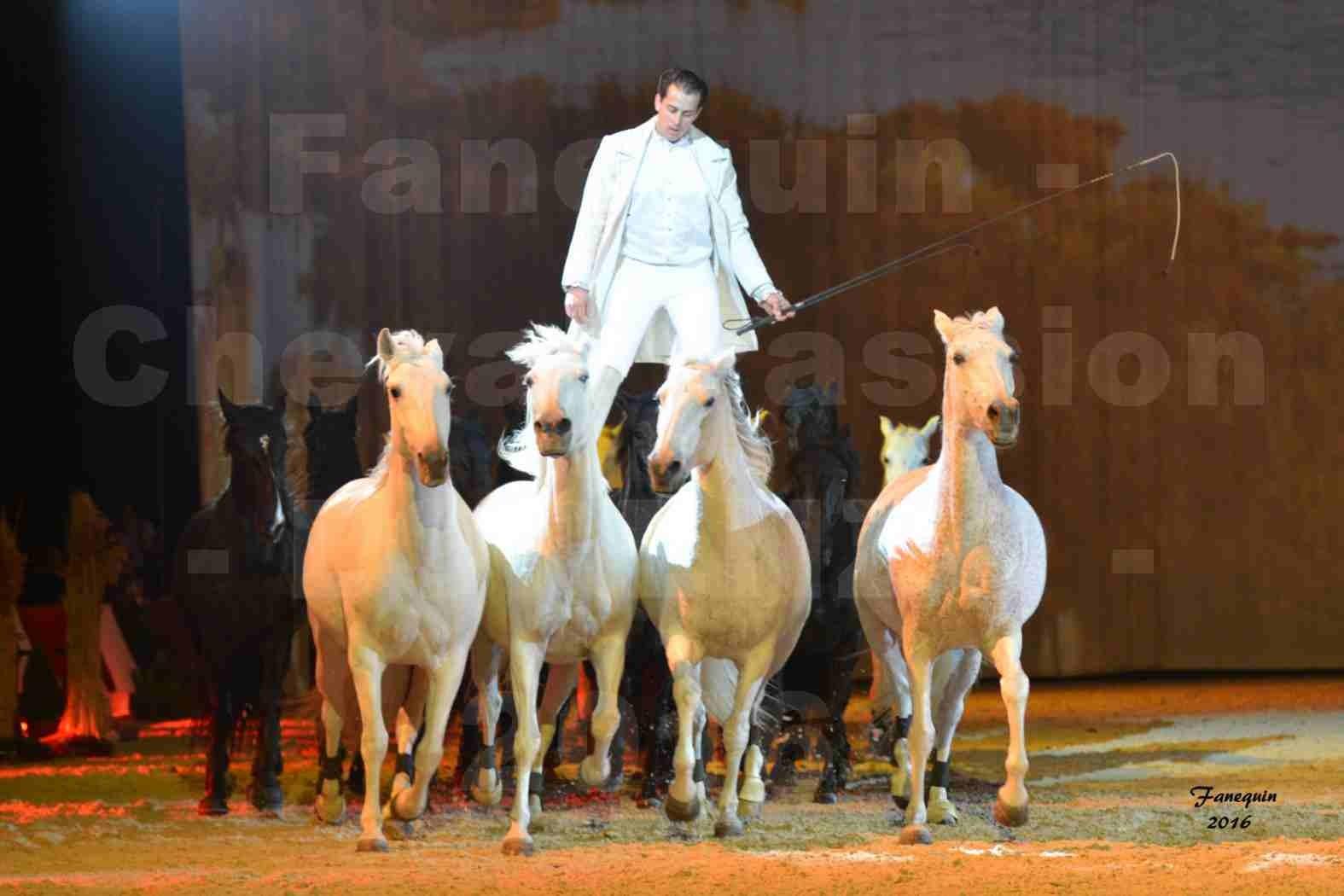 """Cheval Passion 2016 - Spectacle les Crinières d'OR - LORENZO """"Blanc"""" - représentation du 23 janvier 2016 - 33"""