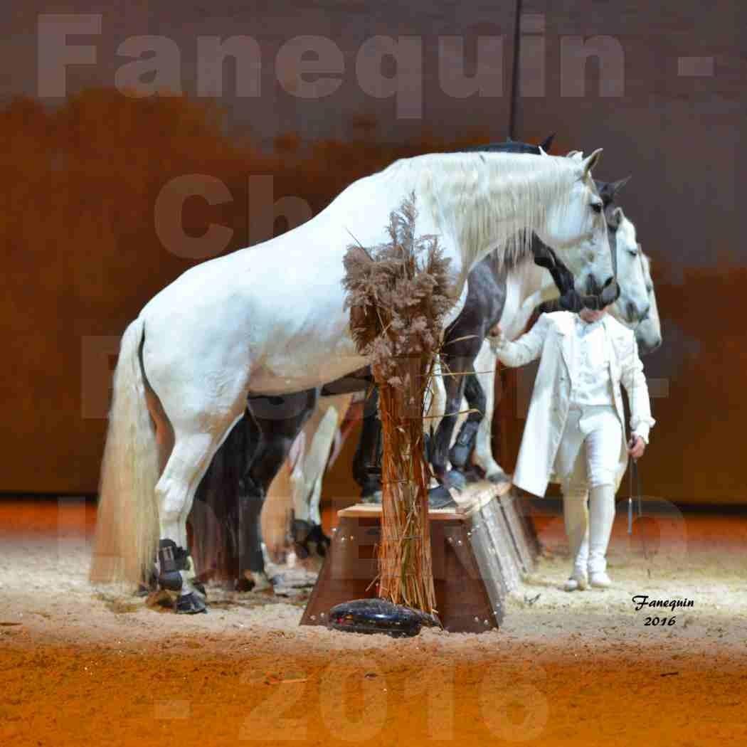 """Cheval Passion 2016 - Spectacle les Crinières d'OR - LORENZO """"Blanc"""" - représentation du 20 janvier 2016 - 44"""