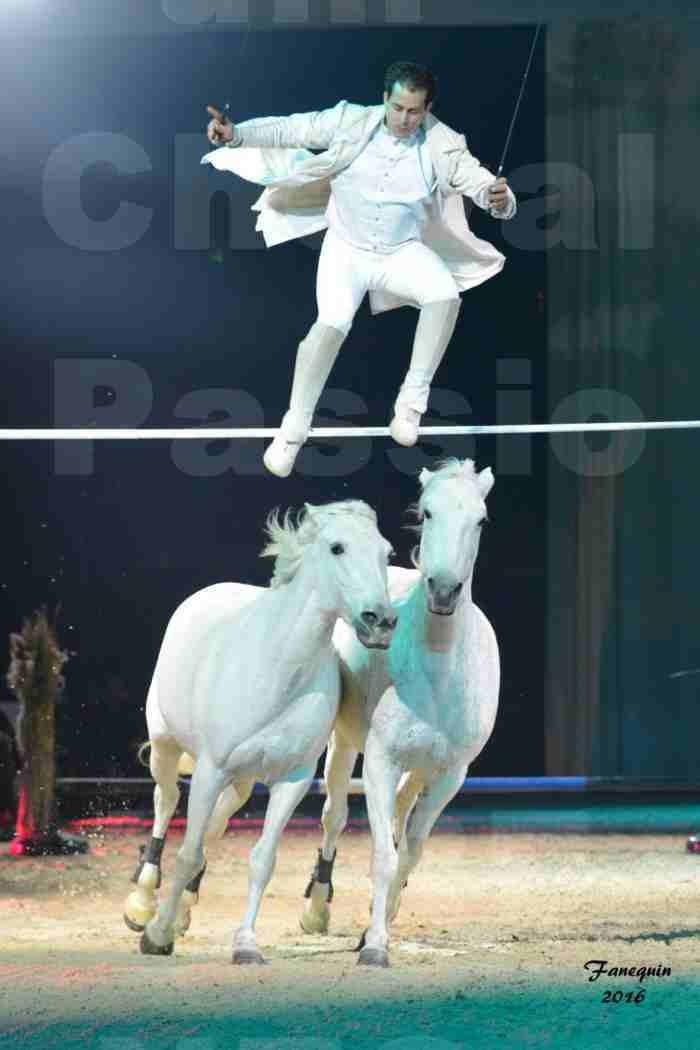 """Cheval Passion 2016 - Spectacle les Crinières d'OR - LORENZO """"Blanc"""" - représentation du 23 janvier 2016 - 07"""