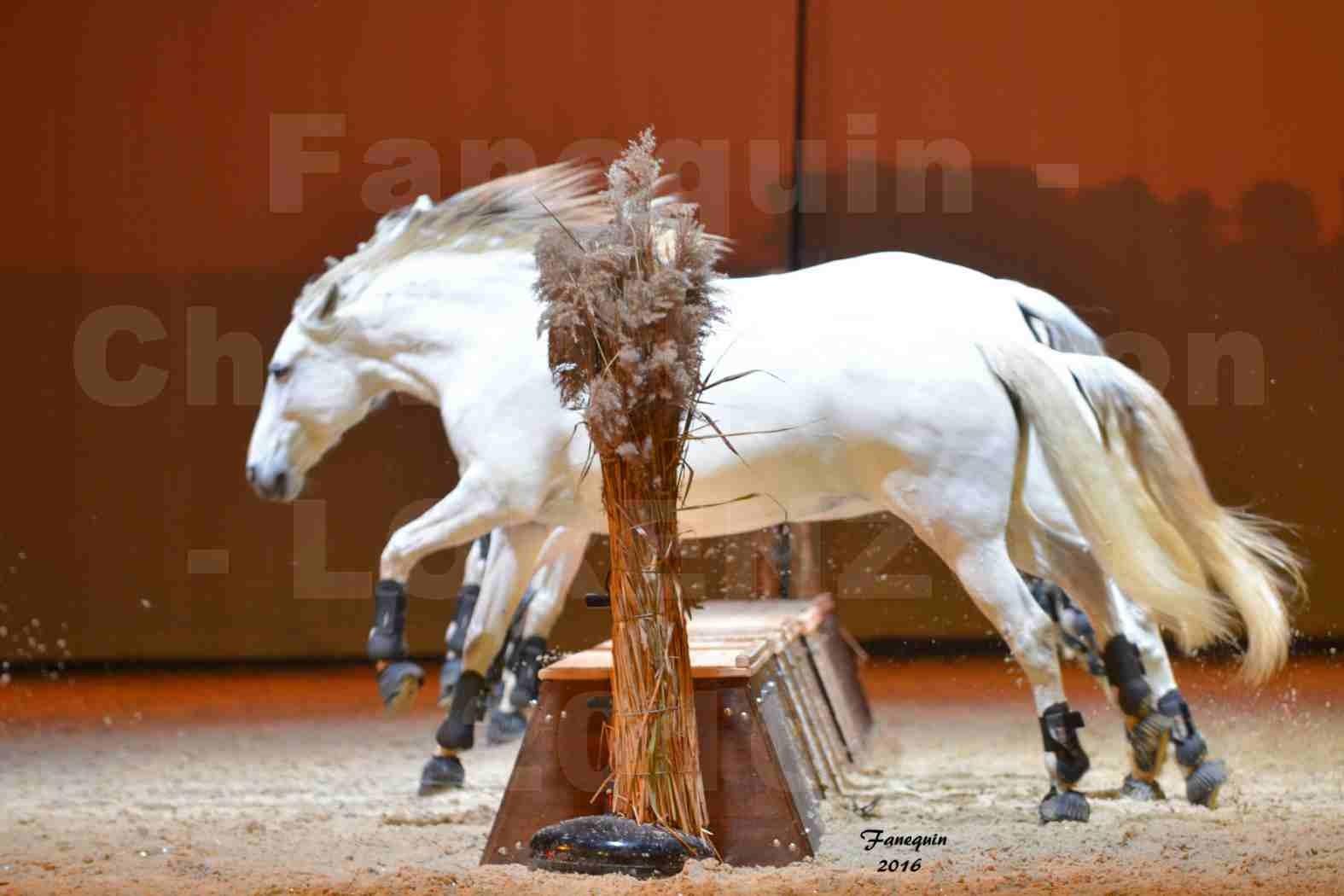 """Cheval Passion 2016 - Spectacle les Crinières d'OR - LORENZO """"Blanc"""" - représentation du 20 janvier 2016 - 41"""