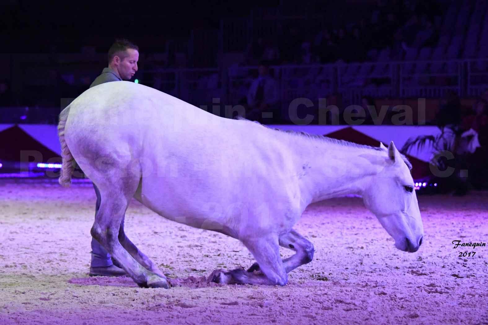 Cheval Passion 2017 - M. I. S. E. C. - Ludovic LONGO & 1 cheval en liberté - 10