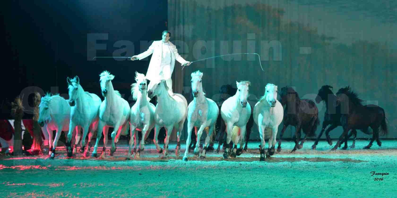 """Cheval Passion 2016 - Spectacle les Crinières d'OR - LORENZO """"Blanc"""" - représentation du 23 janvier 2016 - 23"""