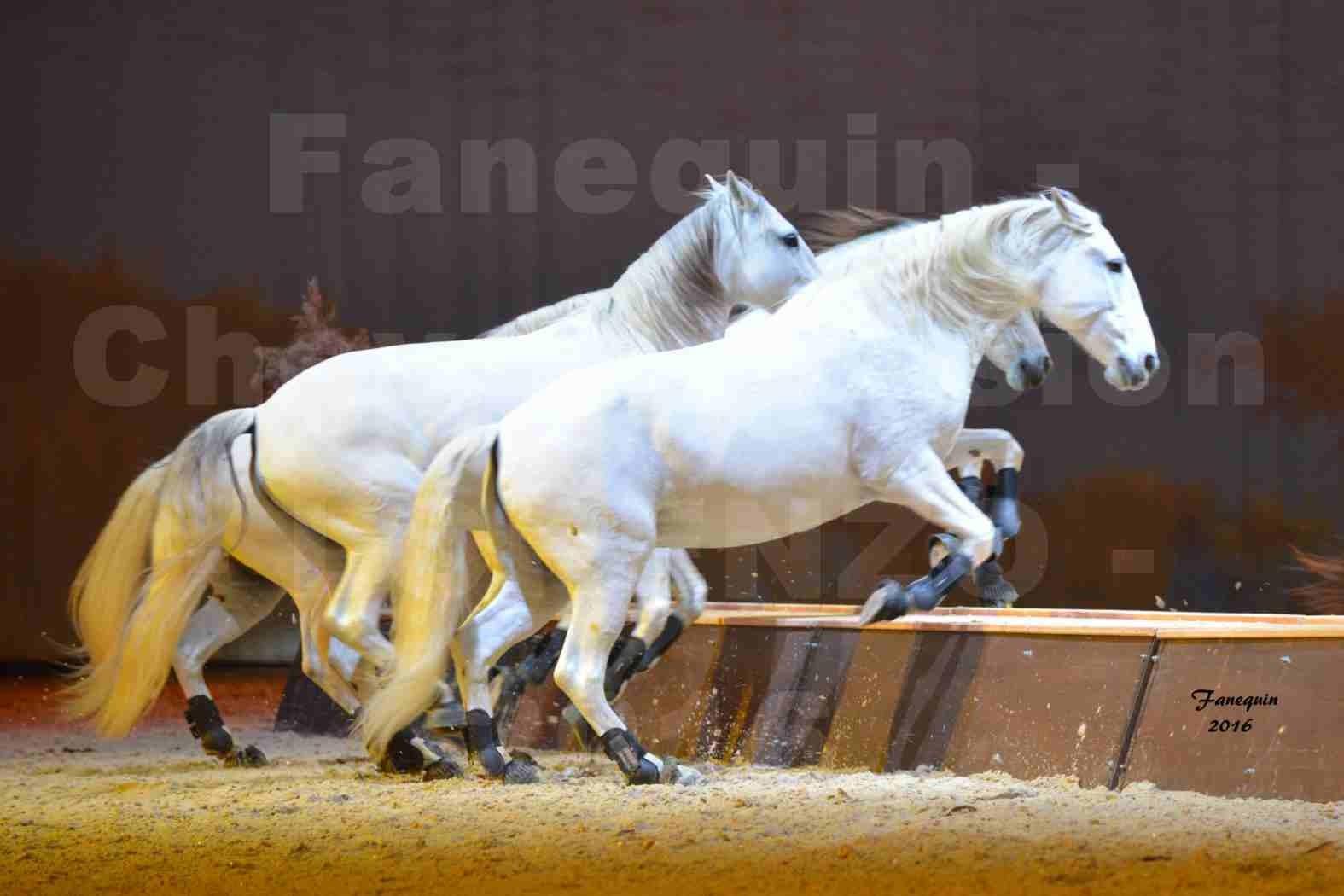 """Cheval Passion 2016 - Spectacle les Crinières d'OR - LORENZO """"Blanc"""" - représentation du 23 janvier 2016 - 39"""