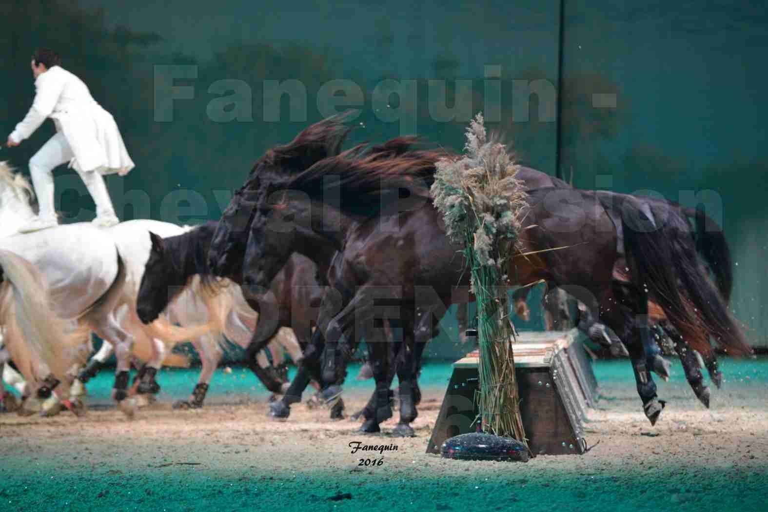 """Cheval Passion 2016 - Spectacle les Crinières d'OR - LORENZO """"Blanc"""" - représentation du 20 janvier 2016 - 21"""
