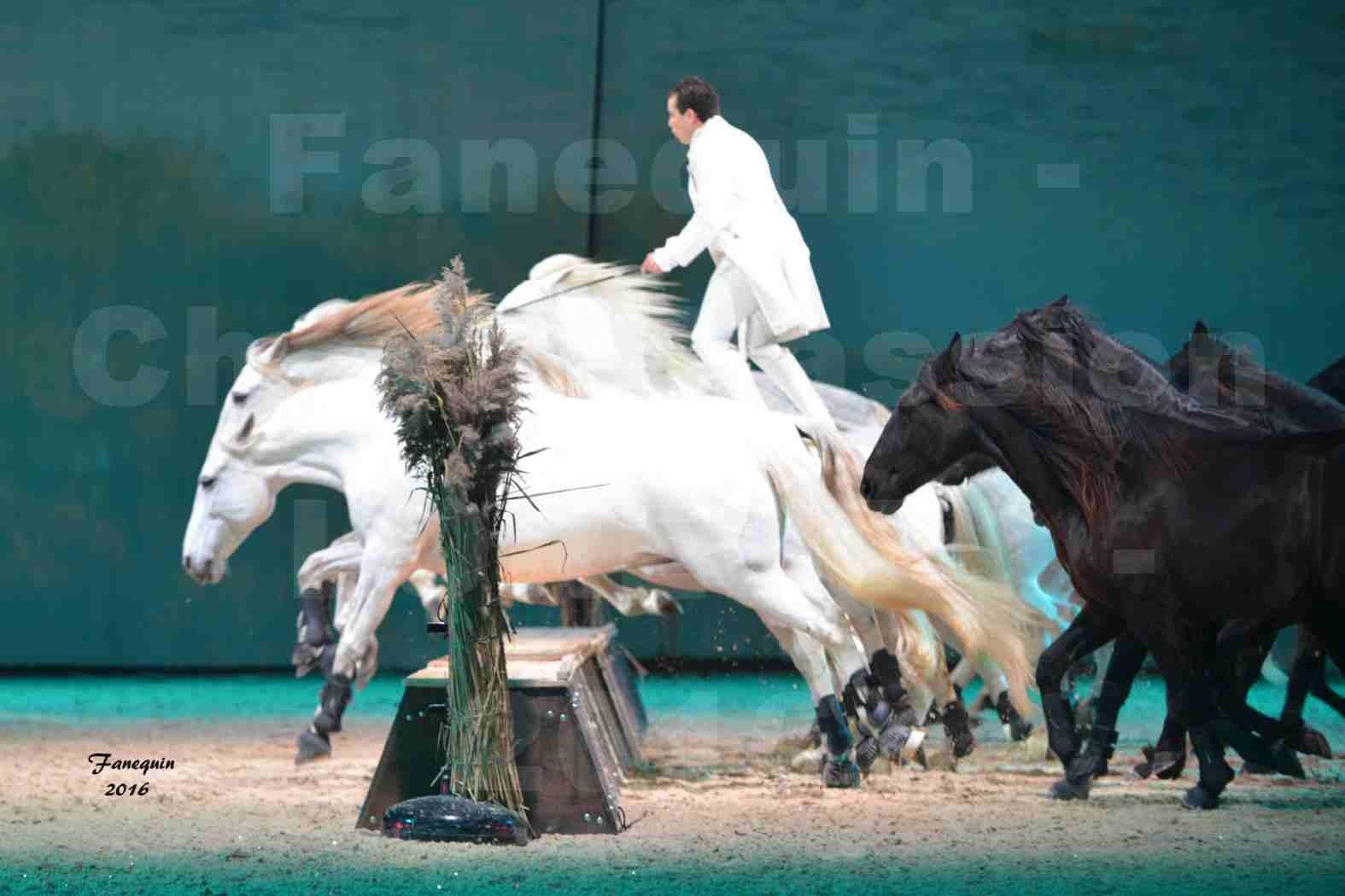 """Cheval Passion 2016 - Spectacle les Crinières d'OR - LORENZO """"Blanc"""" - représentation du 20 janvier 2016 - 17"""