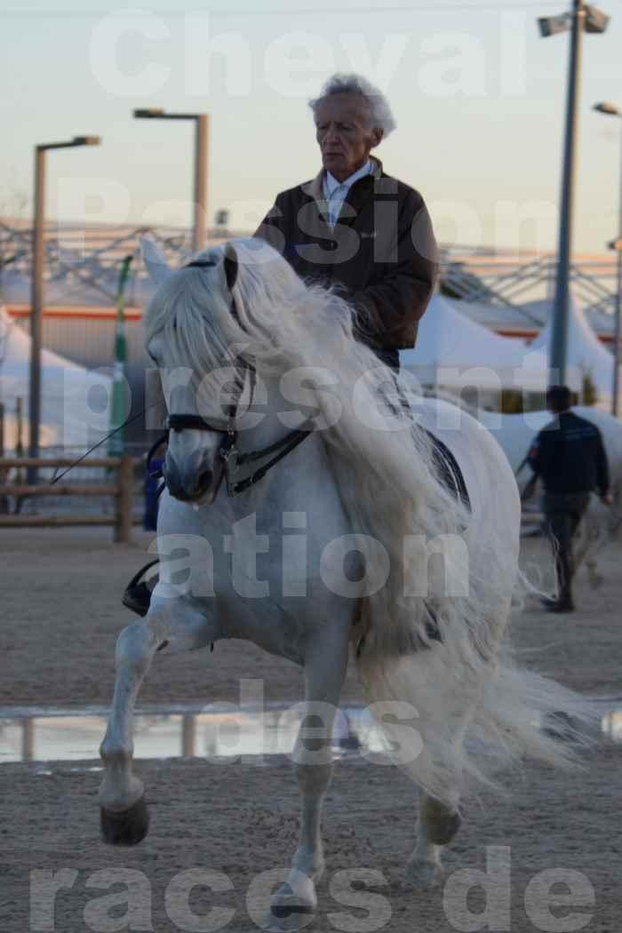 """Cheval Passion 2014 - Etalon """"GALAN""""  blanc écurie Alain LAUZIER - Notre Sélection - 38"""