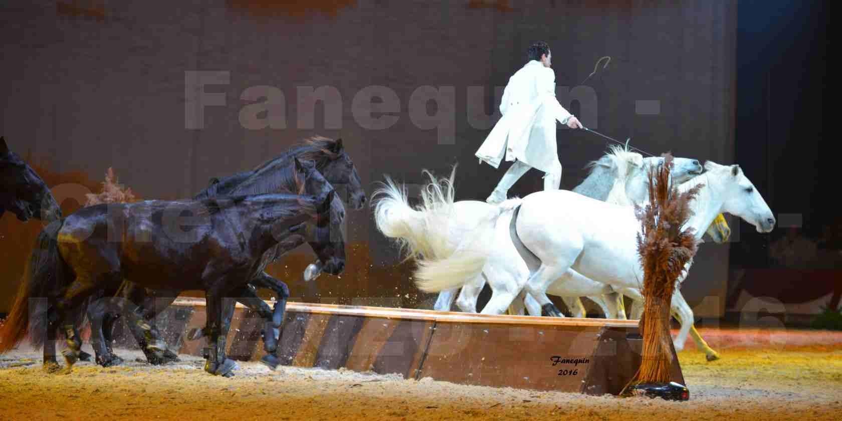 """Cheval Passion 2016 - Spectacle les Crinières d'OR - LORENZO """"Blanc"""" - représentation du 23 janvier 2016 - 35"""