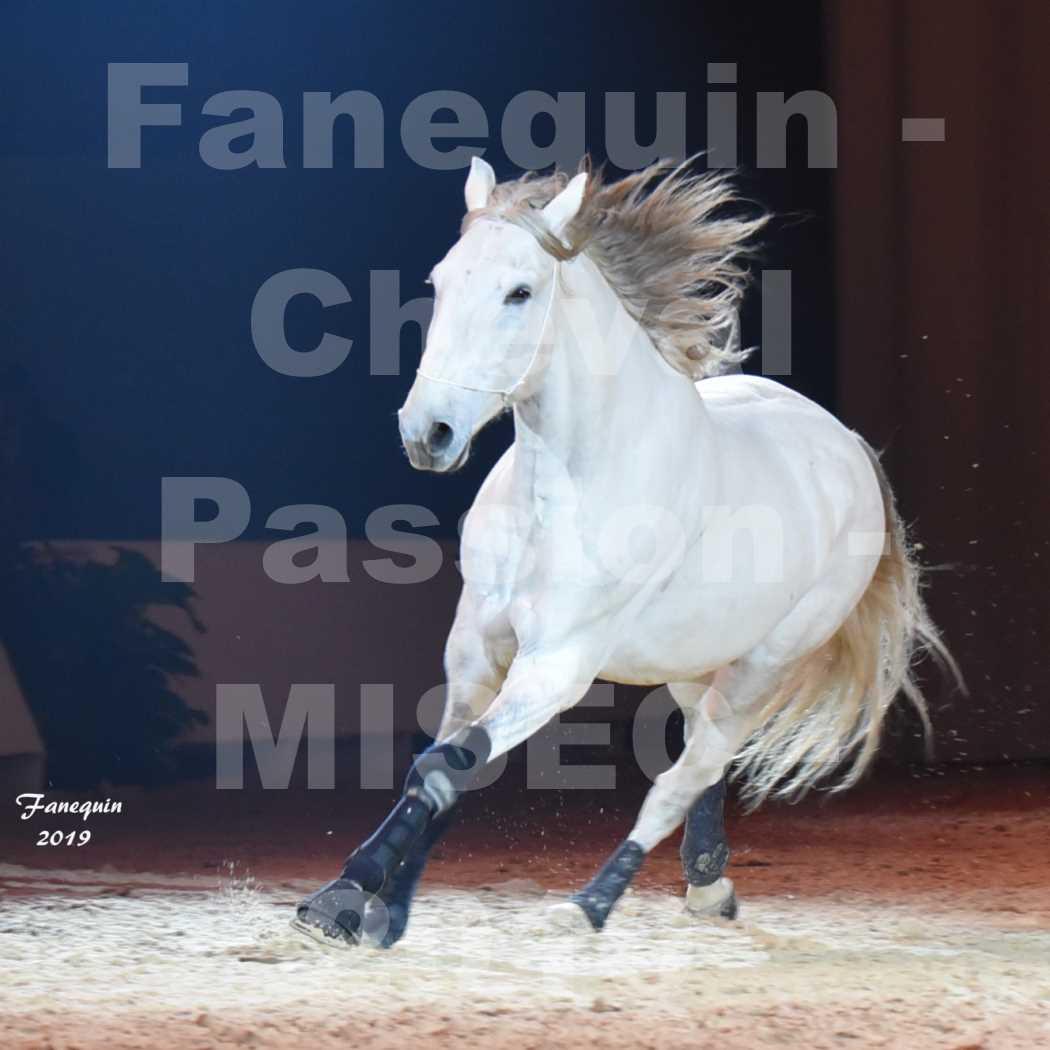 Cheval Passion 2019 - M. I. S. E. C. - Michel CASSAN & cheval en liberté - 03