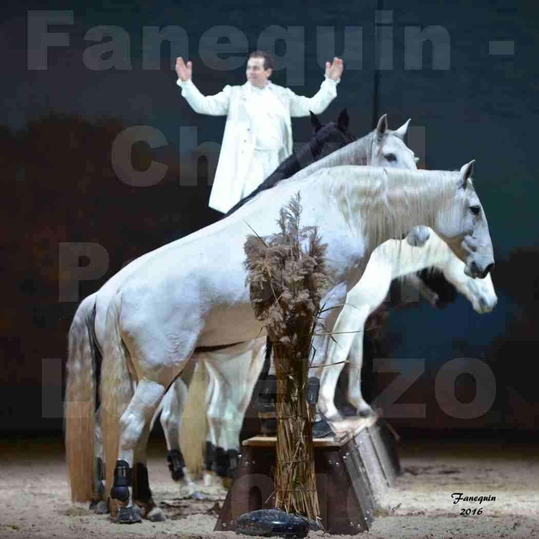 """Cheval Passion 2016 - Spectacle les Crinières d'OR - LORENZO """"Blanc"""" - représentation du 20 janvier 2016 - 43"""