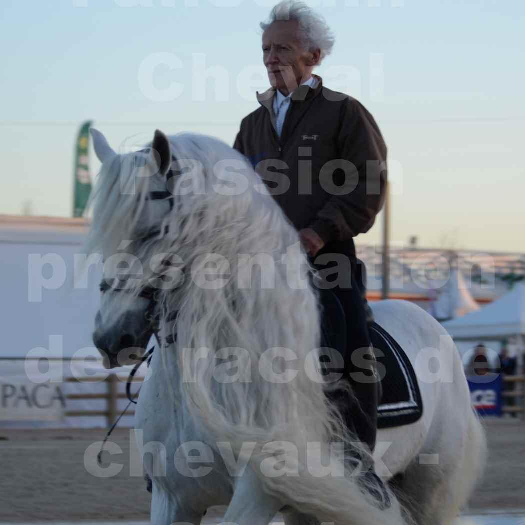 """Cheval Passion 2014 - Etalon """"GALAN""""  blanc écurie Alain LAUZIER - Notre Sélection - Portraits - 12"""