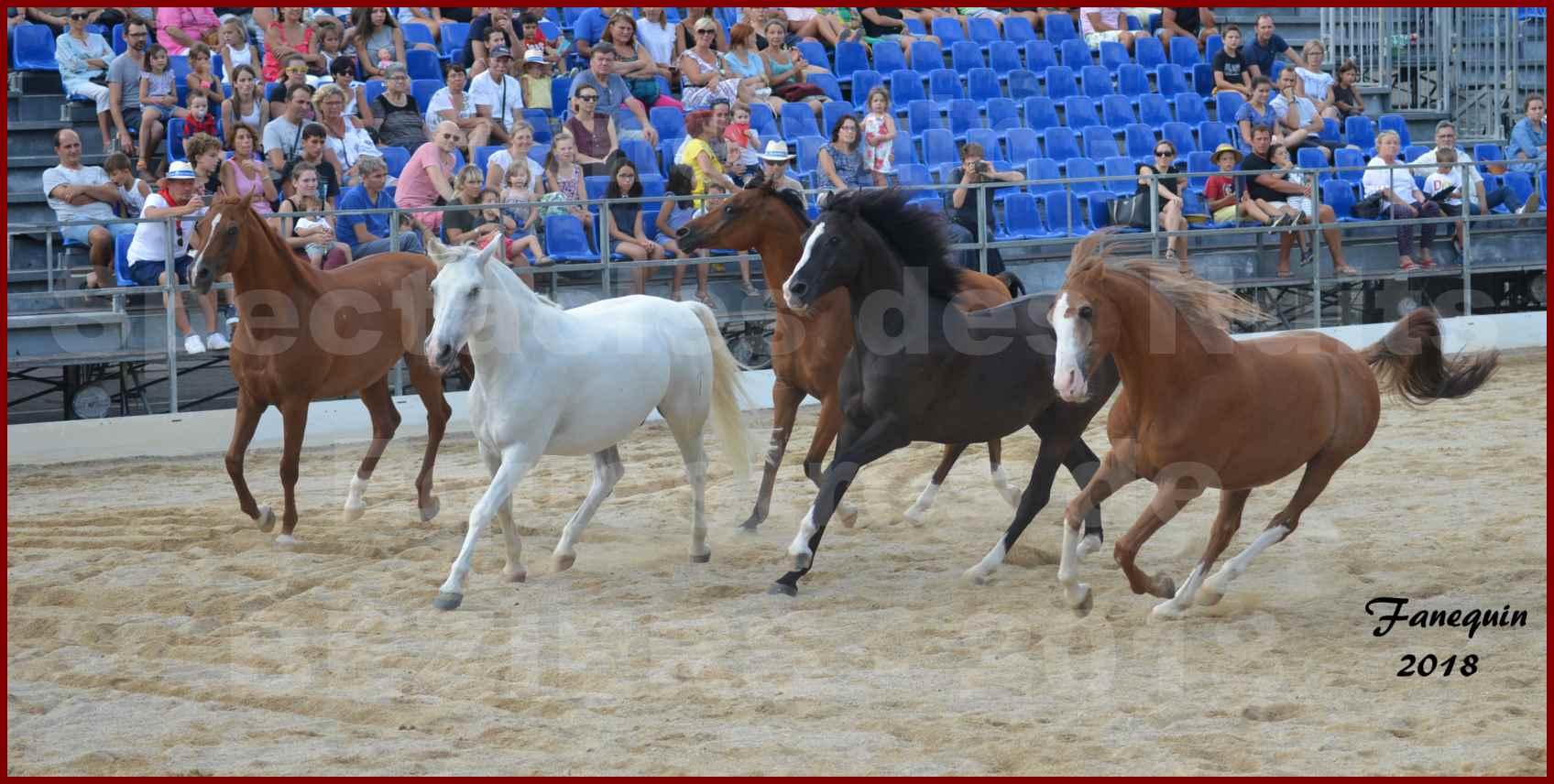"""""""Nuits Équestres""""  de la Féria de BÉZIERS 2018 - Spectacle en journée - Sylvie WILLMS & ses chevaux en liberté - 04"""