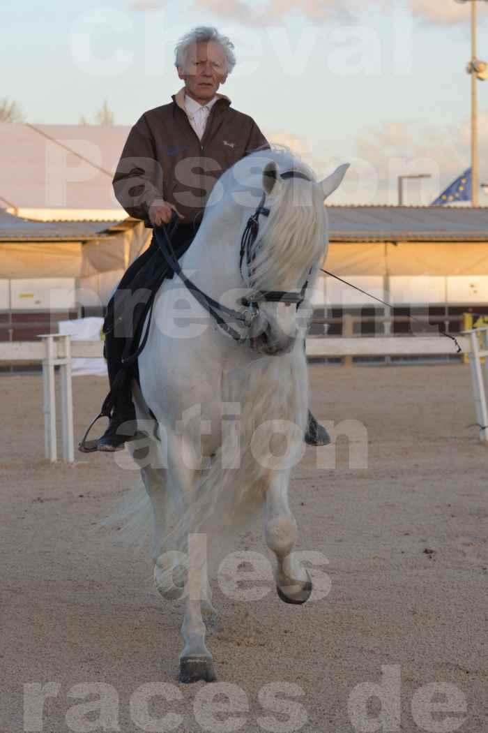 """Cheval Passion 2014 - Etalon """"GALAN""""  blanc écurie Alain LAUZIER - Notre Sélection - 13"""