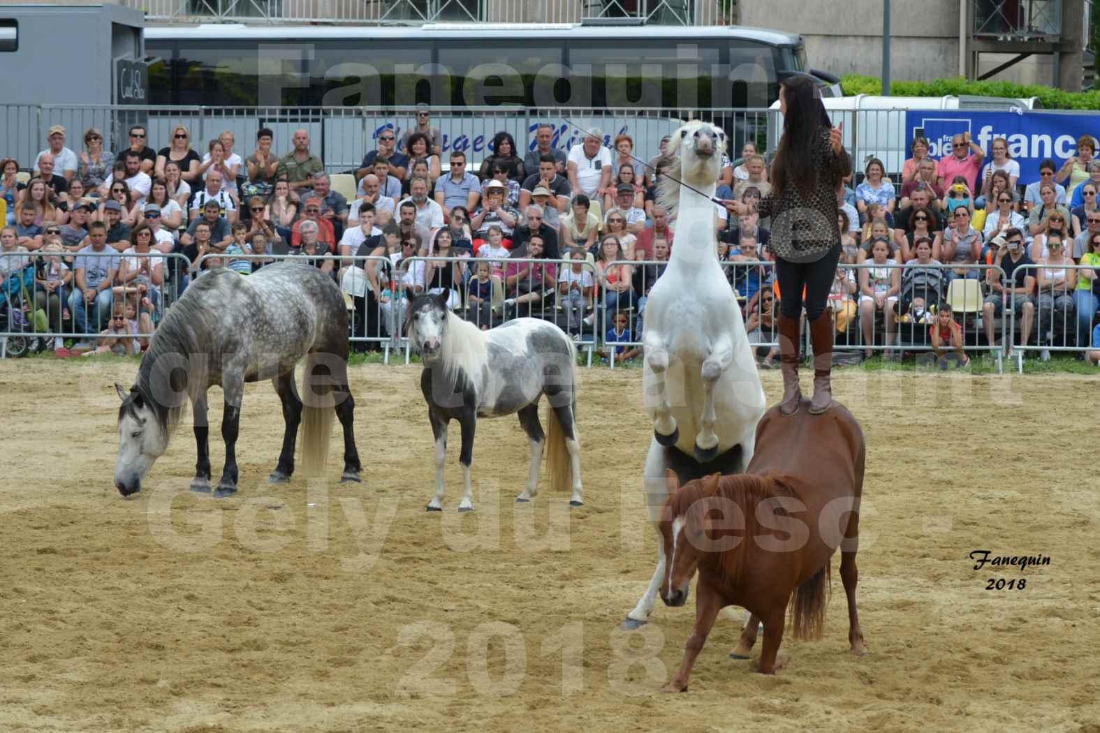 Spectacle Équestre le 3 juin 2018 à Saint Gély du Fesc - 5 chevaux en liberté - Anne Gaëlle BERTHO - 07
