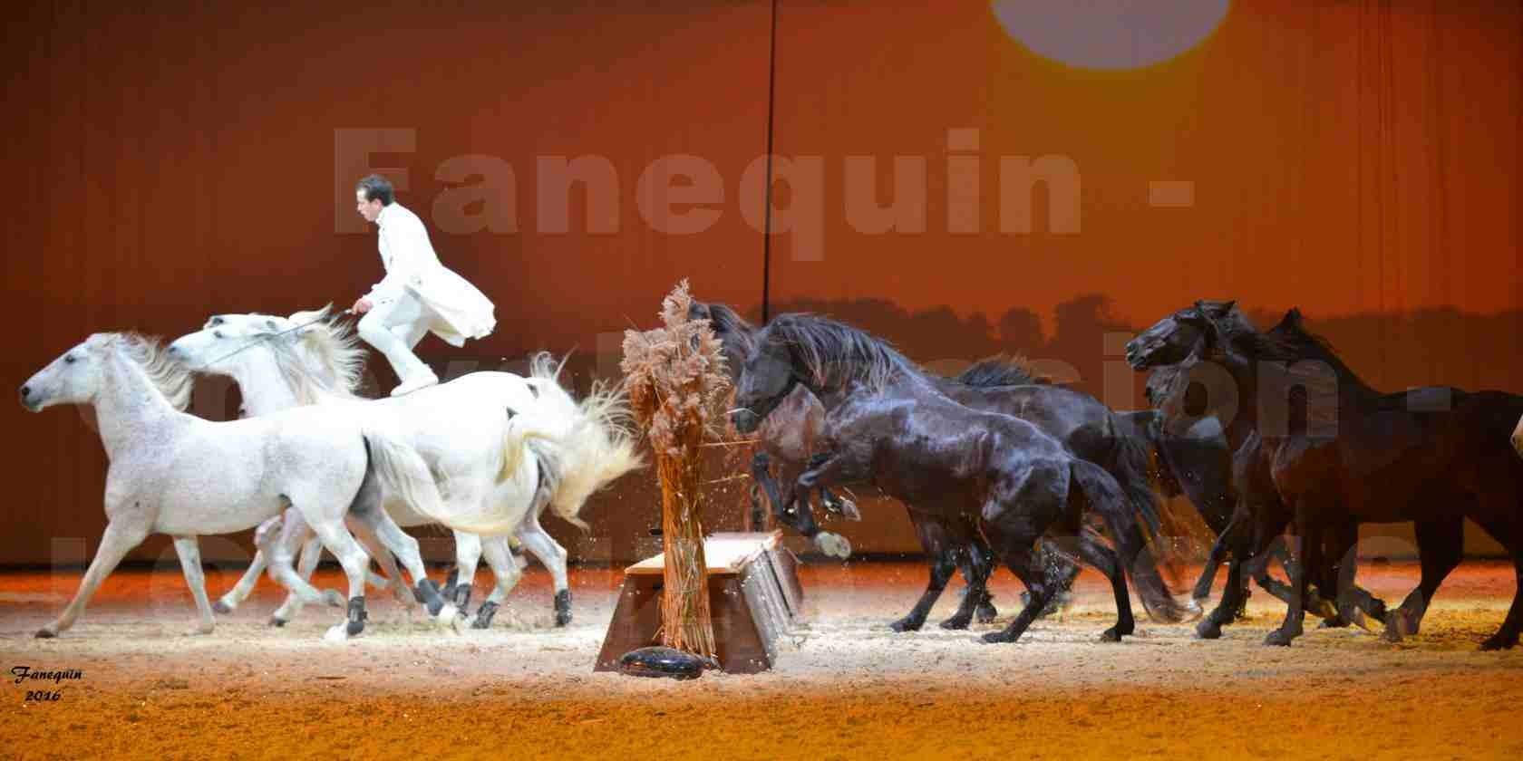 """Cheval Passion 2016 - Spectacle les Crinières d'OR - LORENZO """"Blanc"""" - représentation du 20 janvier 2016 - 38"""