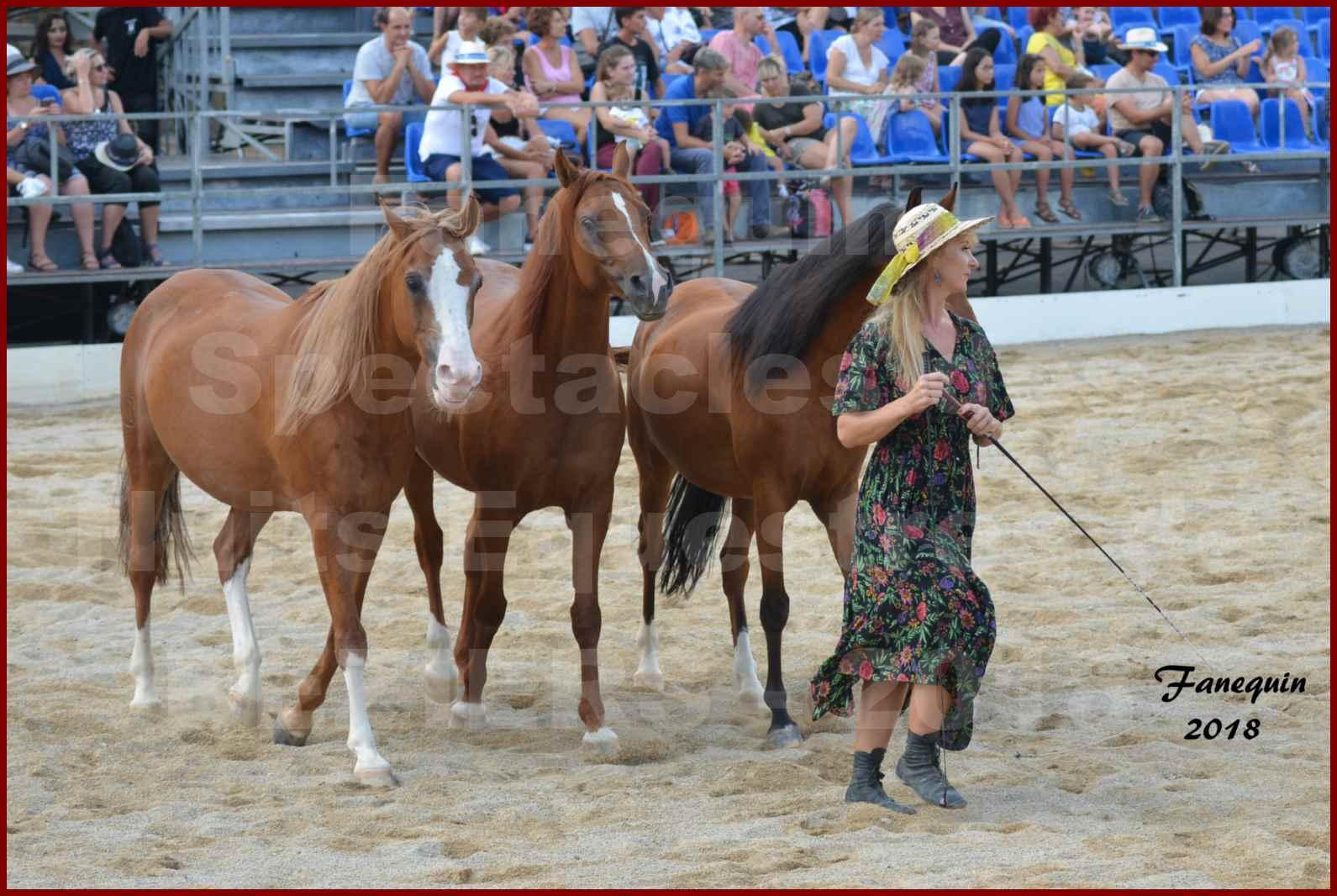 """""""Nuits Équestres""""  de la Féria de BÉZIERS 2018 - Spectacle en journée - Sylvie WILLMS & ses chevaux en liberté - 08"""