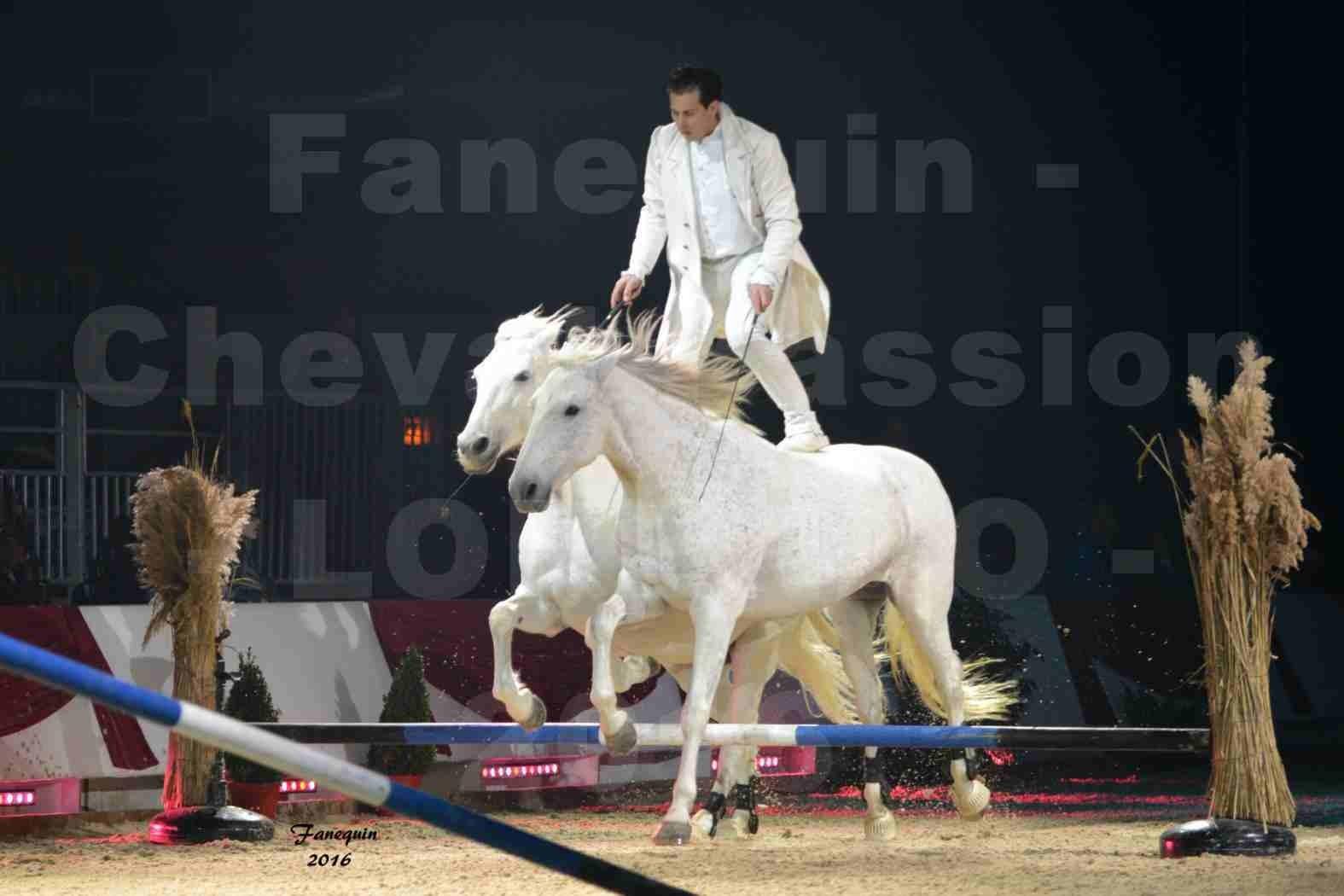 """Cheval Passion 2016 - Spectacle les Crinières d'OR - LORENZO """"Blanc"""" - représentation du 20 janvier 2016 - 03"""