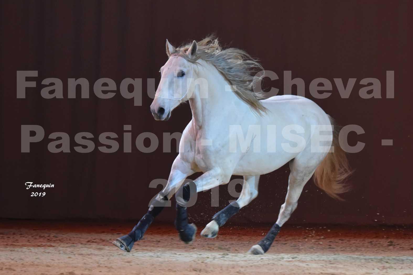 Cheval Passion 2019 - M. I. S. E. C. - Michel CASSAN & cheval en liberté - 01