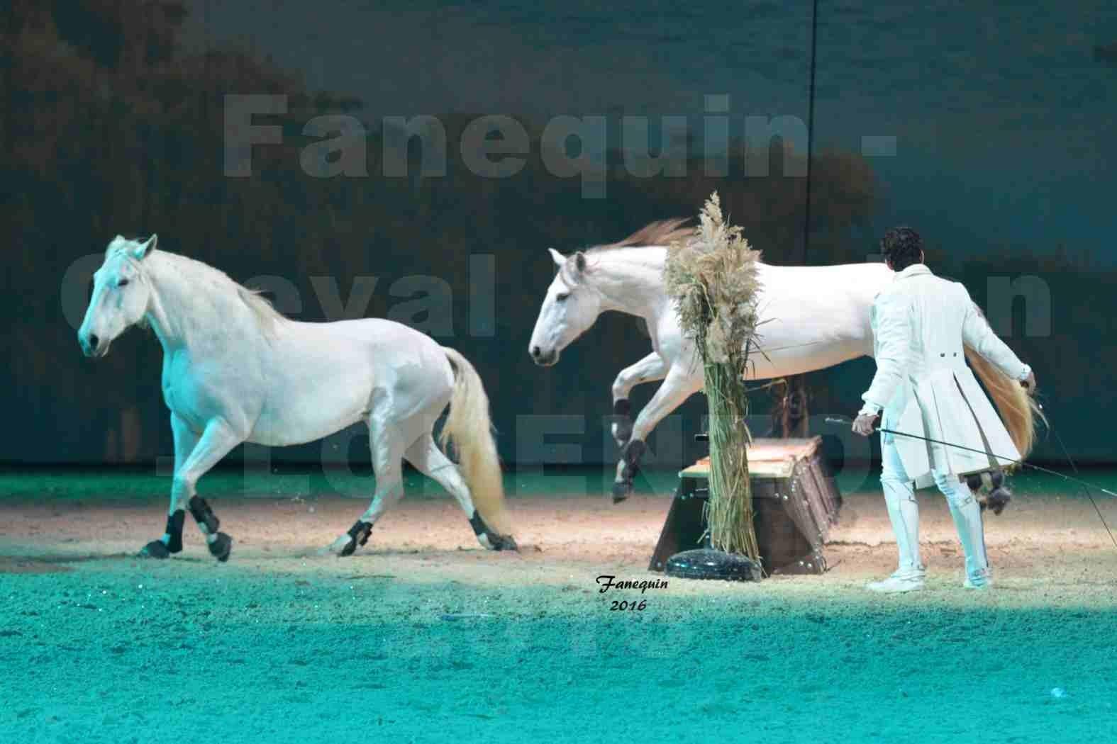 """Cheval Passion 2016 - Spectacle les Crinières d'OR - LORENZO """"Blanc"""" - représentation du 20 janvier 2016 - 10"""
