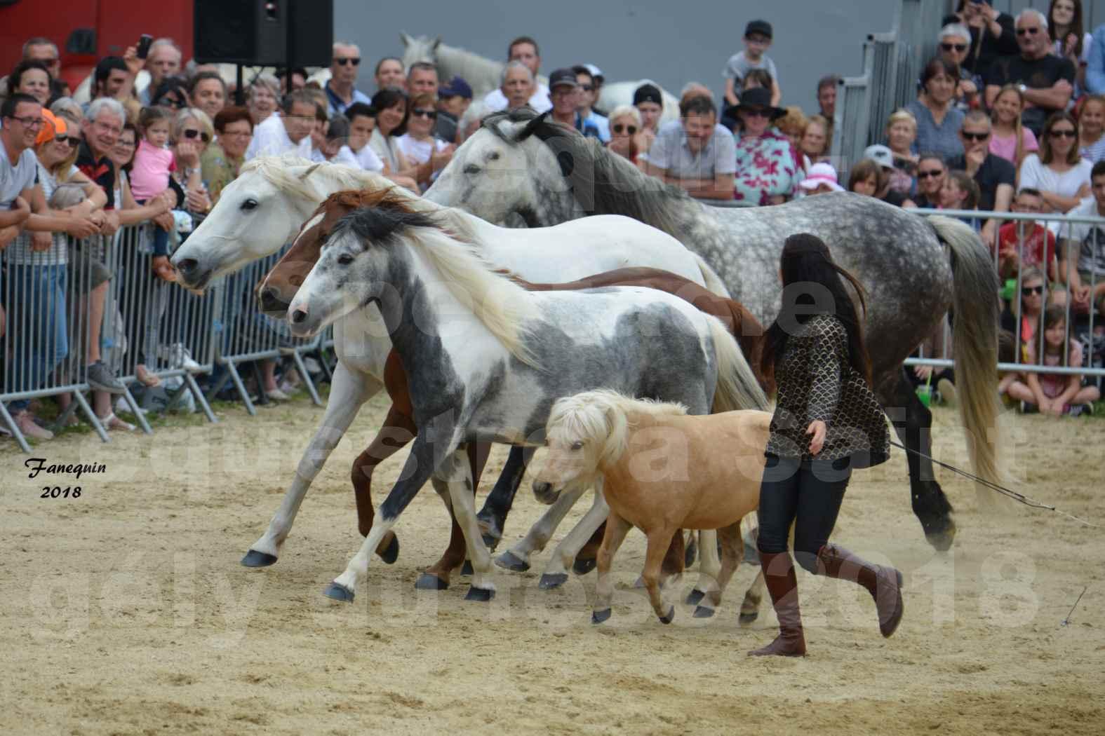 Spectacle Équestre le 3 juin 2018 à Saint Gély du Fesc - 5 chevaux en liberté - Anne Gaëlle BERTHO - 09