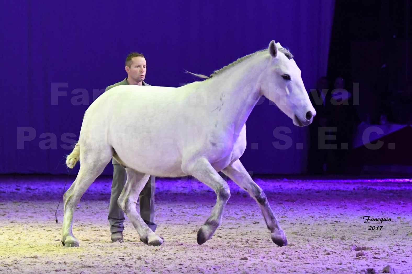 Cheval Passion 2017 - M. I. S. E. C. - Ludovic LONGO & 1 cheval en liberté - 03