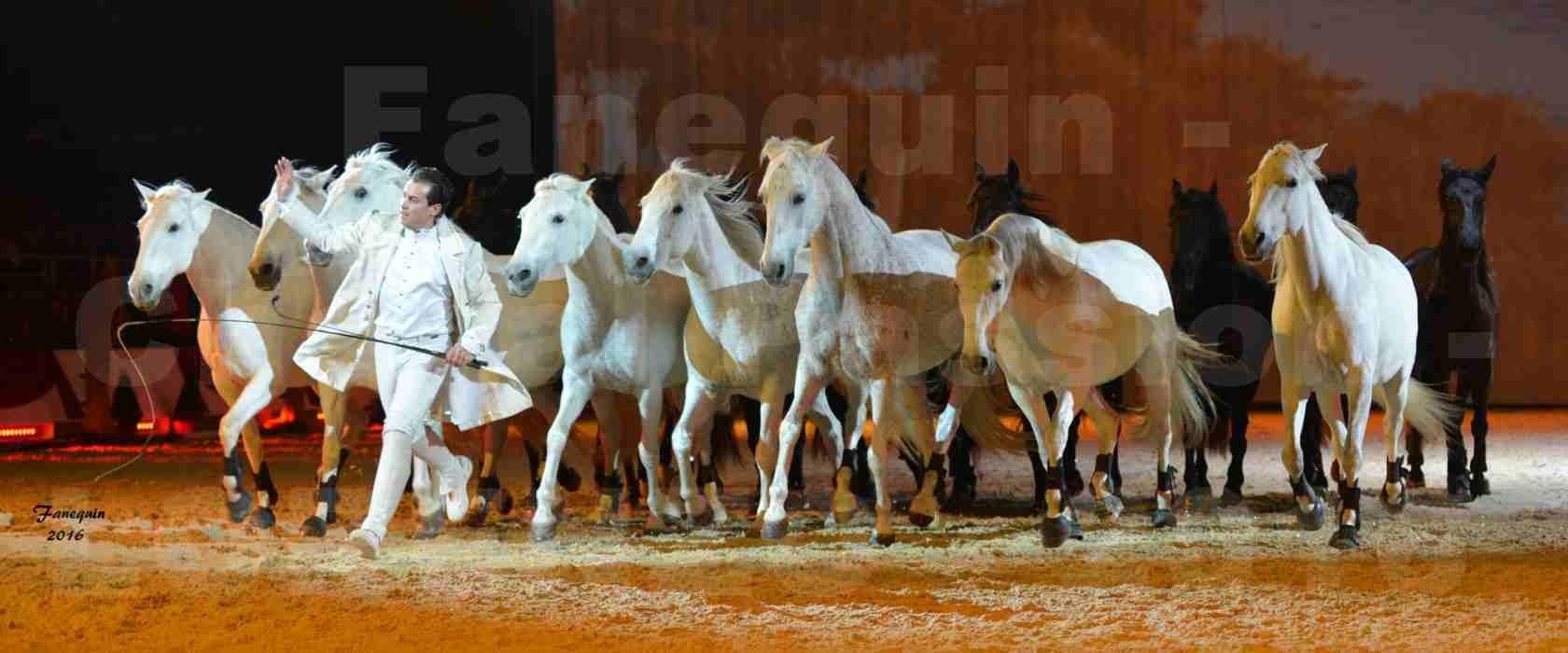 """Cheval Passion 2016 - Spectacle les Crinières d'OR - LORENZO """"Blanc"""" - représentation du 20 janvier 2016 - 47"""