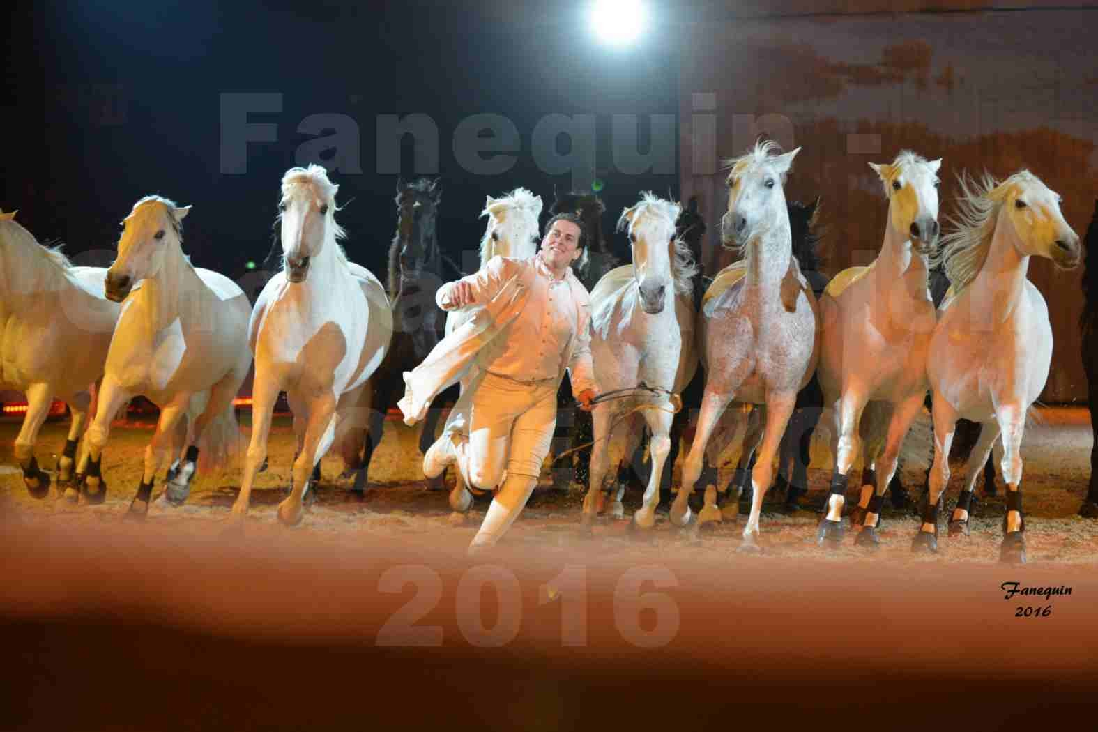 """Cheval Passion 2016 - Spectacle les Crinières d'OR - LORENZO """"Blanc"""" - représentation du 20 janvier 2016 - 48"""