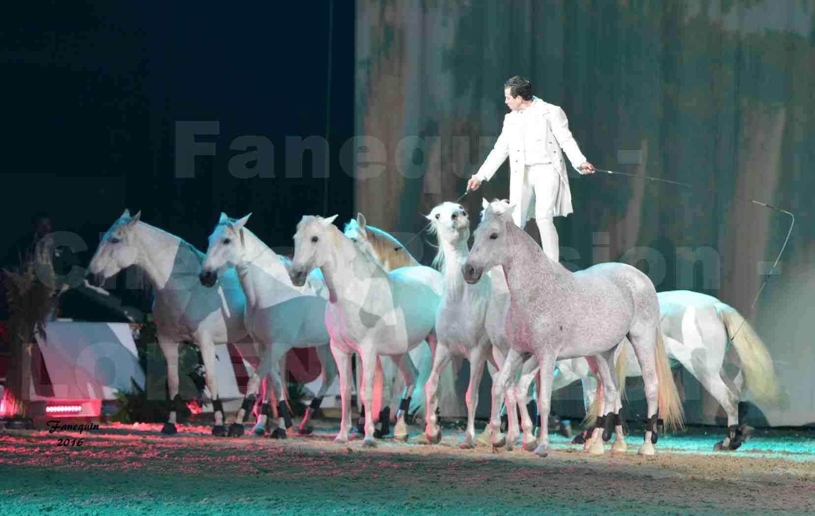 """Cheval Passion 2016 - Spectacle les Crinières d'OR - LORENZO """"Blanc"""" - représentation du 20 janvier 2016 - 31"""