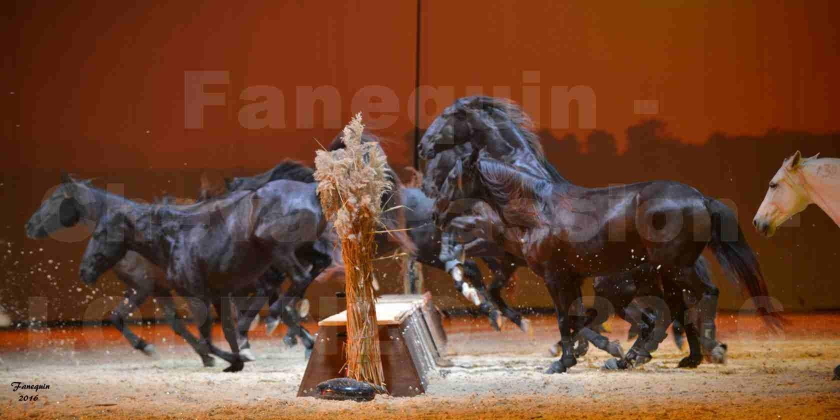 """Cheval Passion 2016 - Spectacle les Crinières d'OR - LORENZO """"Blanc"""" - représentation du 20 janvier 2016 - 39"""