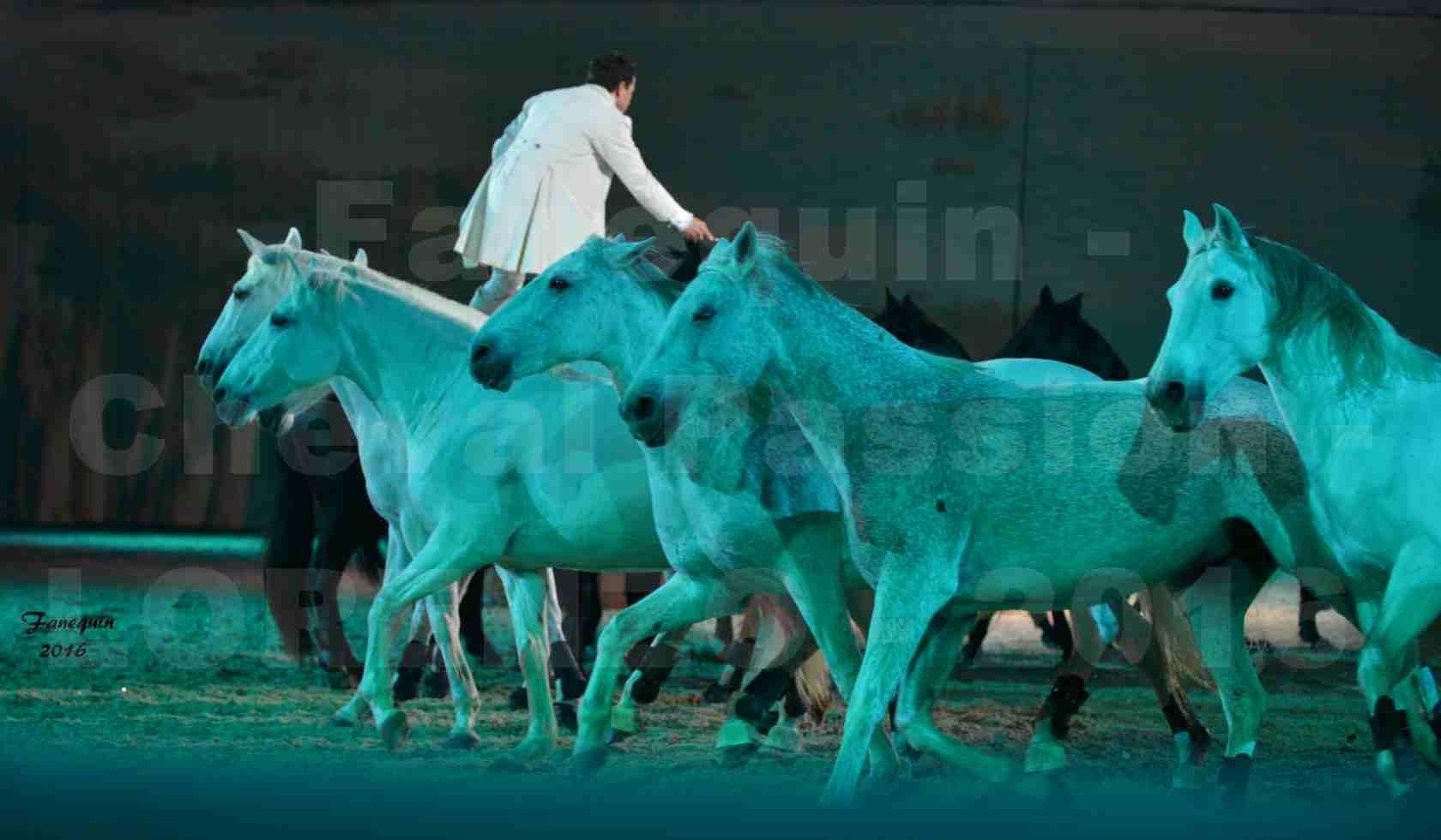"""Cheval Passion 2016 - Spectacle les Crinières d'OR - LORENZO """"Blanc"""" - représentation du 20 janvier 2016 - 30"""