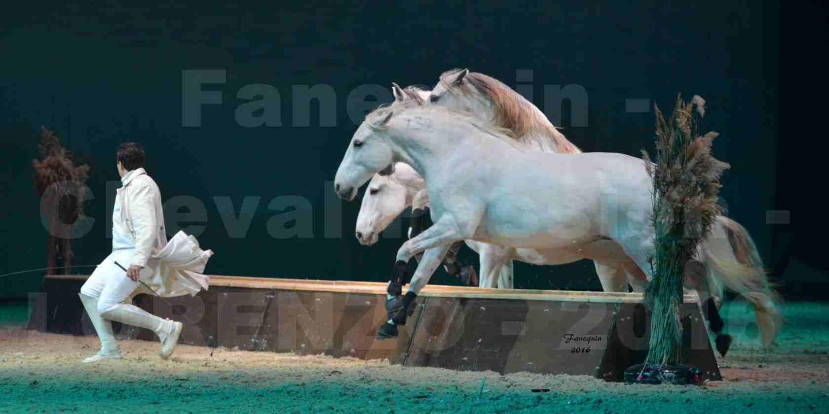 """Cheval Passion 2016 - Spectacle les Crinières d'OR - LORENZO """"Blanc"""" - représentation du 23 janvier 2016 - 17"""